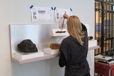 Director of Exhibitions Kate Quinn preparing a case with animal mummies (that cute crocodile is in the center)