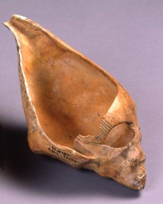 U.8191, conch shell oil lamp or scoop/pouring vessel.