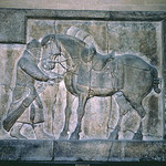 Taizong Horse