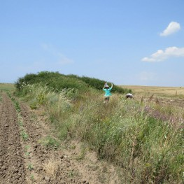 Trudging through the fallow fields, tracking down a possible tumulus.  (Photo by: Amanda Ball)