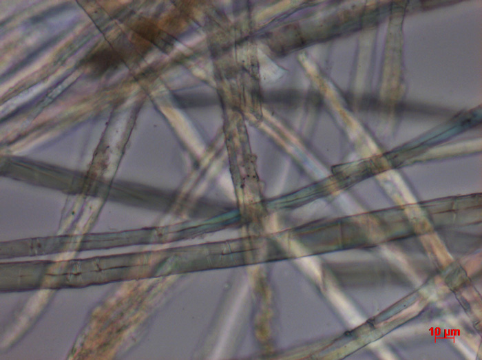 Fiber sample in plane-polarized light, 400X