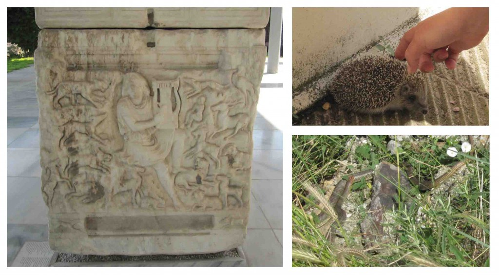 Left: Orpherus and his animal audience on a Roman sarcophagus at the Thessaloniki museum, Right: some of our faunal visitors.