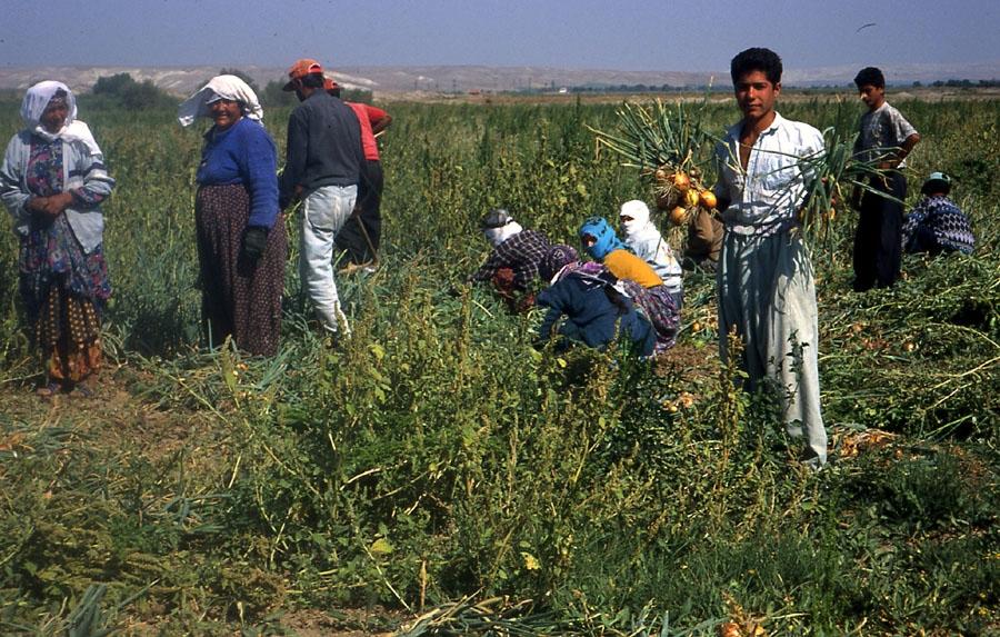 agriculture.#22JPG