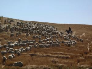 herding42