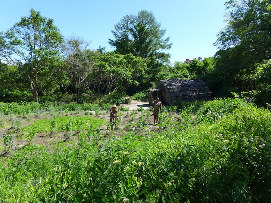 Native interpreters farming on the Wampanoag side of the Plimoth Plantation. Photo by Margaret Bruchac.