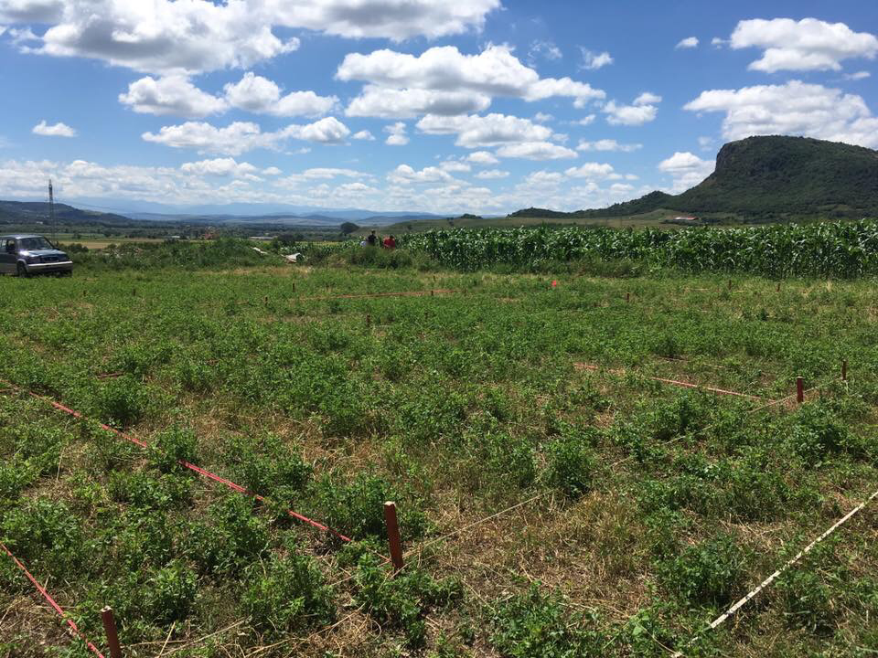 The site, before we broke ground (July, 2016), with Magura in the background and the Carpathian Mountains in the distance. Photo by Jane Sancinito.