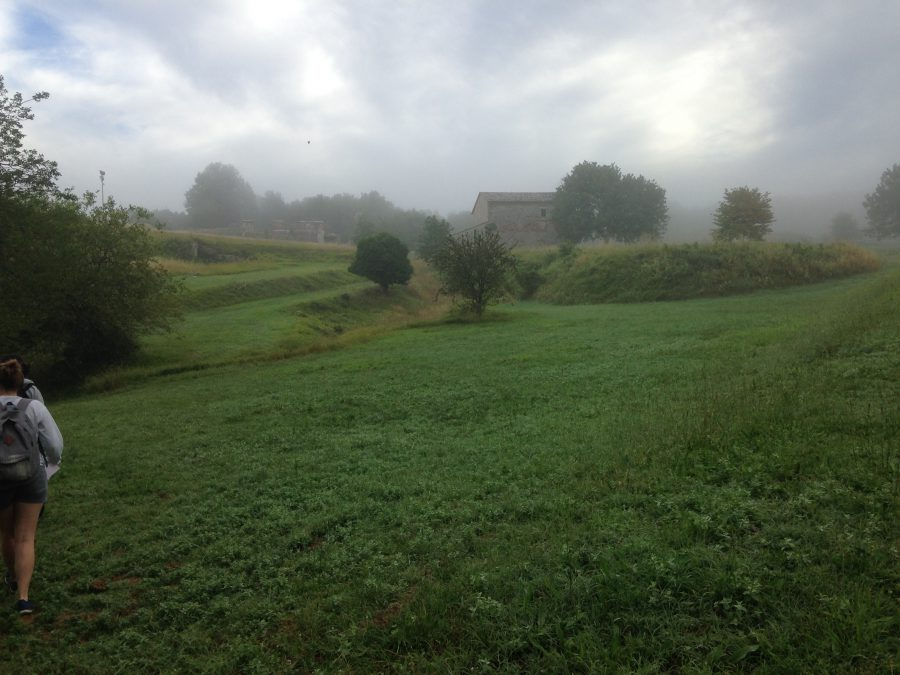 The dig site, shrouded in morning mist (and weeds). Photo by Emma Brown.