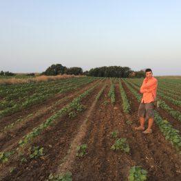 Byzantinist George Makris resurveying fields. Photo by Kurtis Tanaka.