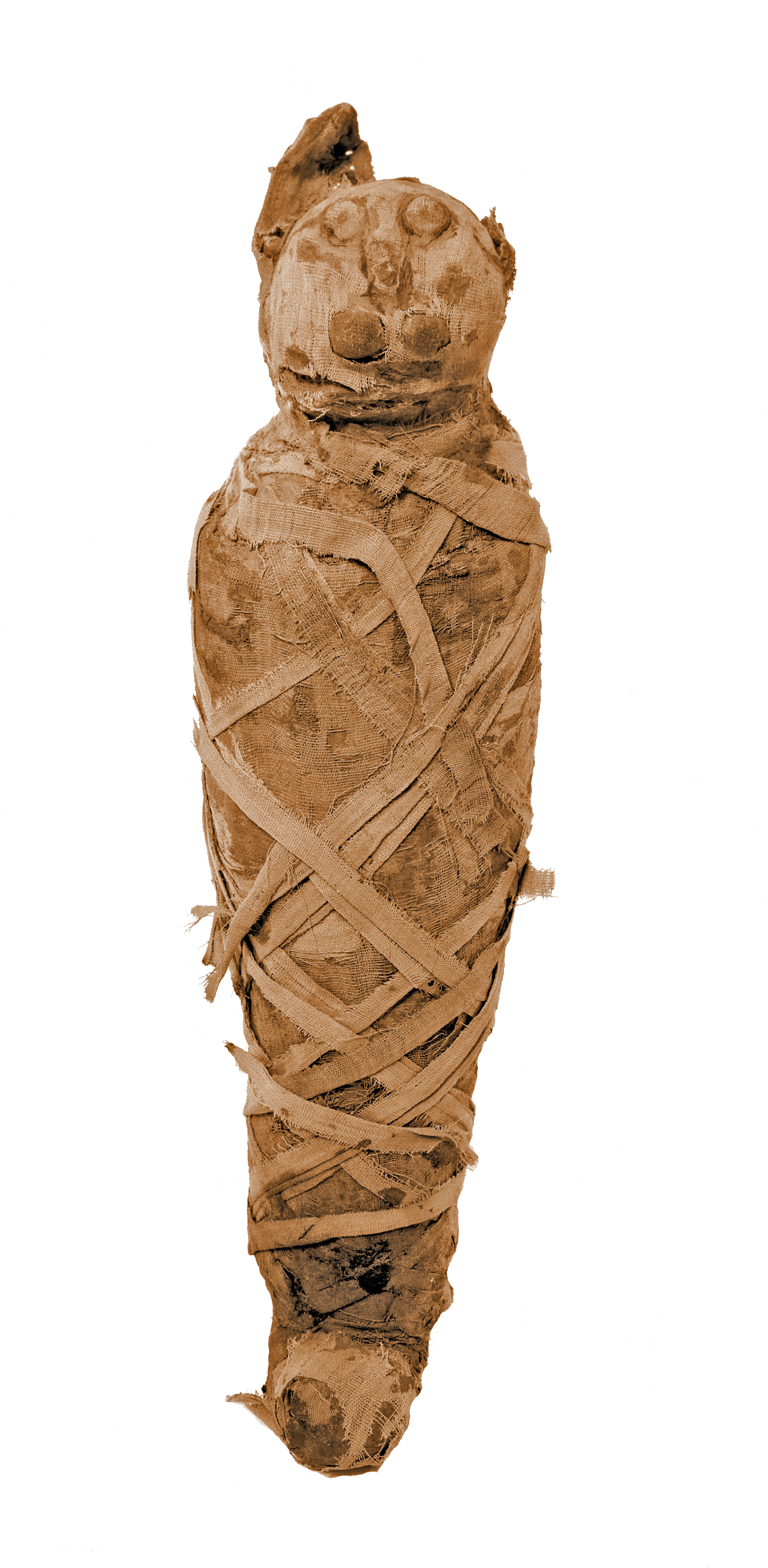 Cat_Mummy