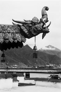 Water monster gargoyle on temple roof, Tibet 2005.  Photograph by Andrea Baldeck.