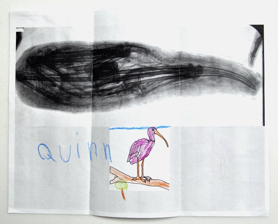 Quinn drawing