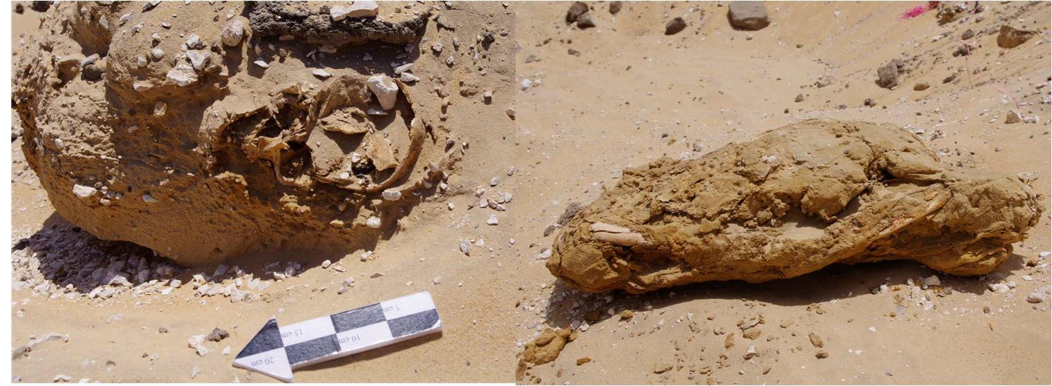 Mummy upon discovery, before excavation (left) and after excavation (right)