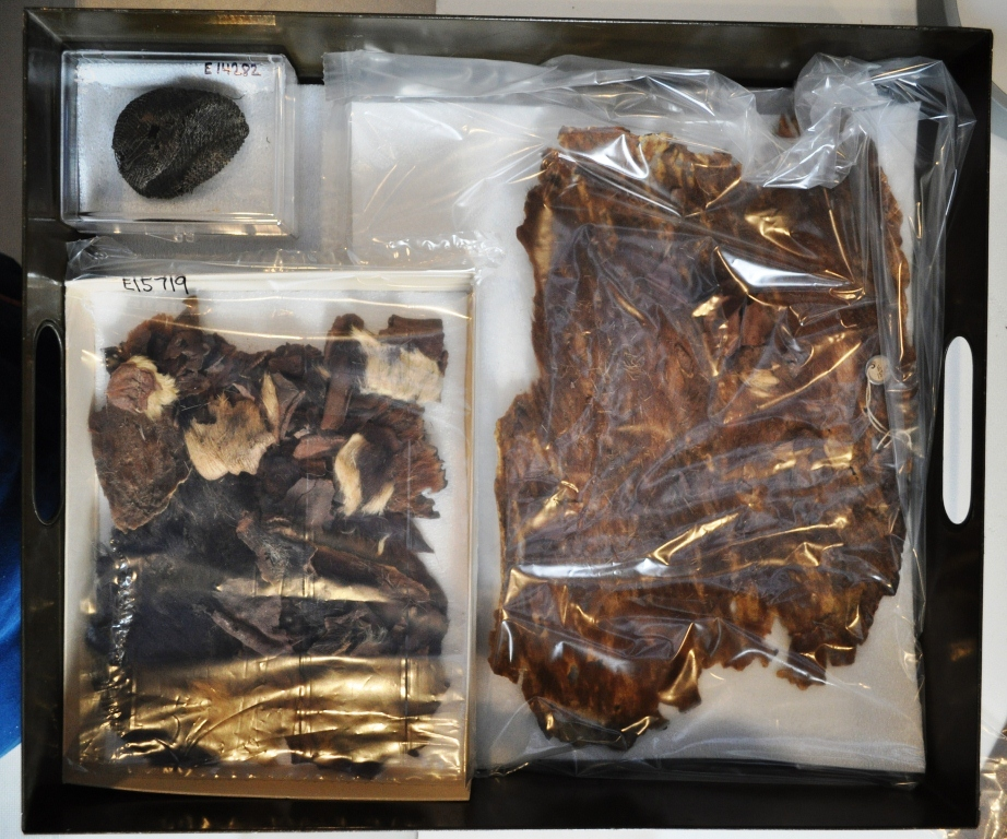 Contents of the drawer, containing bits of elephant and giraffe hide, with the hair intact.