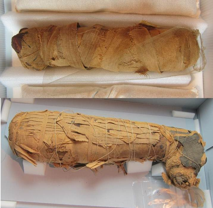 Cat (above) and dog (below) mummies