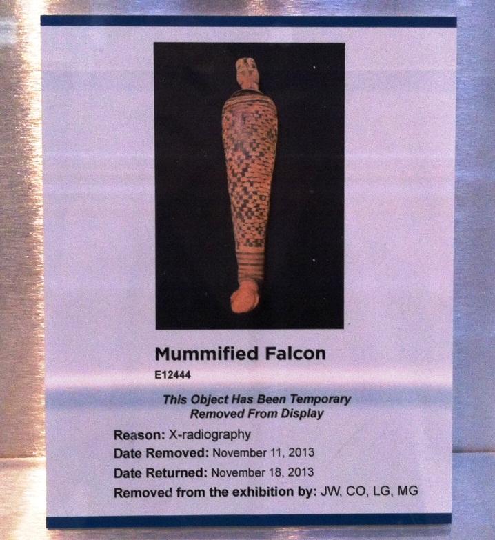 falcon sign