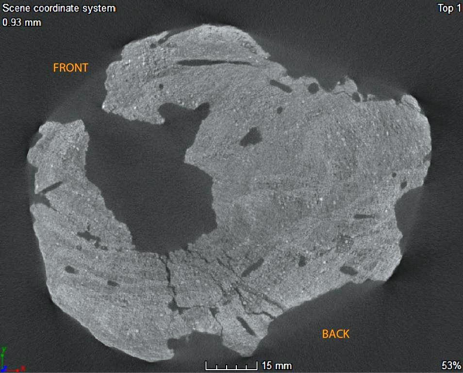 CT-scan picture of E17911, showing the damaged structure of the wood.