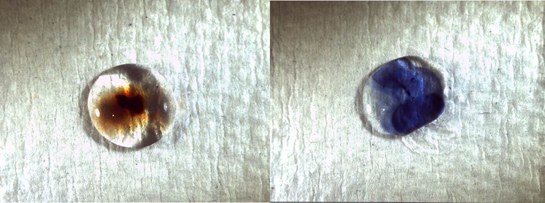 Left: coating sample from the box after spot test (negative result) Right: control cellulose nitrate adhesive after spot test (positive result)