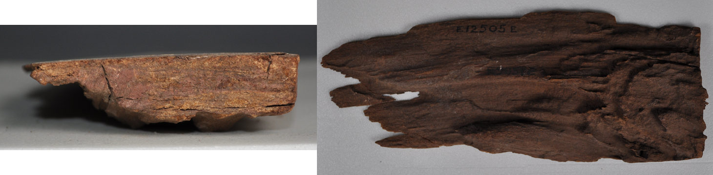 These images show the exposed wood on the side (left) and back (right) of one of the coffin fragments. Can you guess what type of wood this might be?