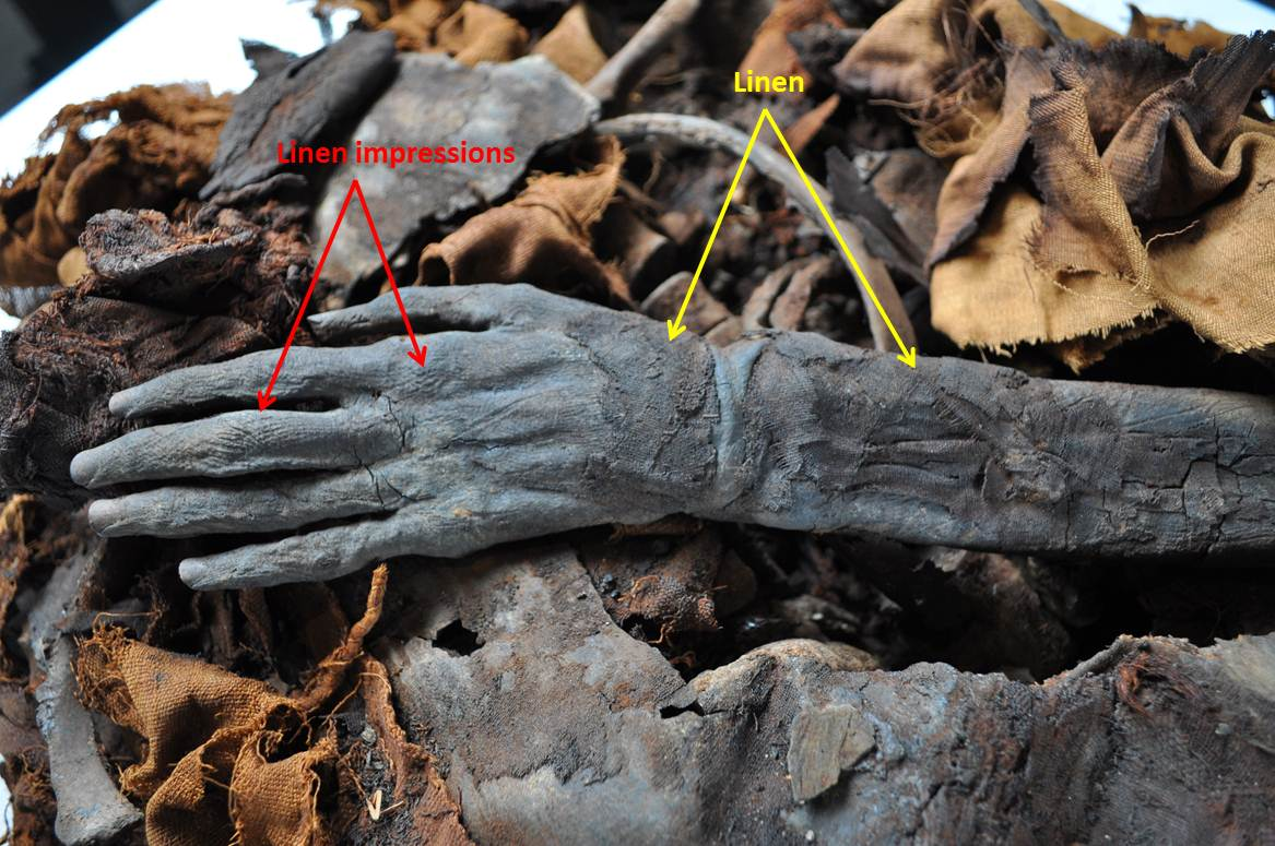 A detail of the left hand and arm. Note the presence of fingernails, and the linen and linen impressions, marked on the photo with yellow and red arrows.