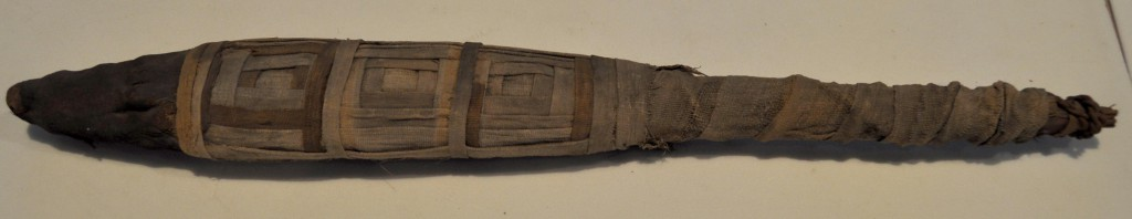Teaser! This crocodile mummy is one of the newest additions to the lab.