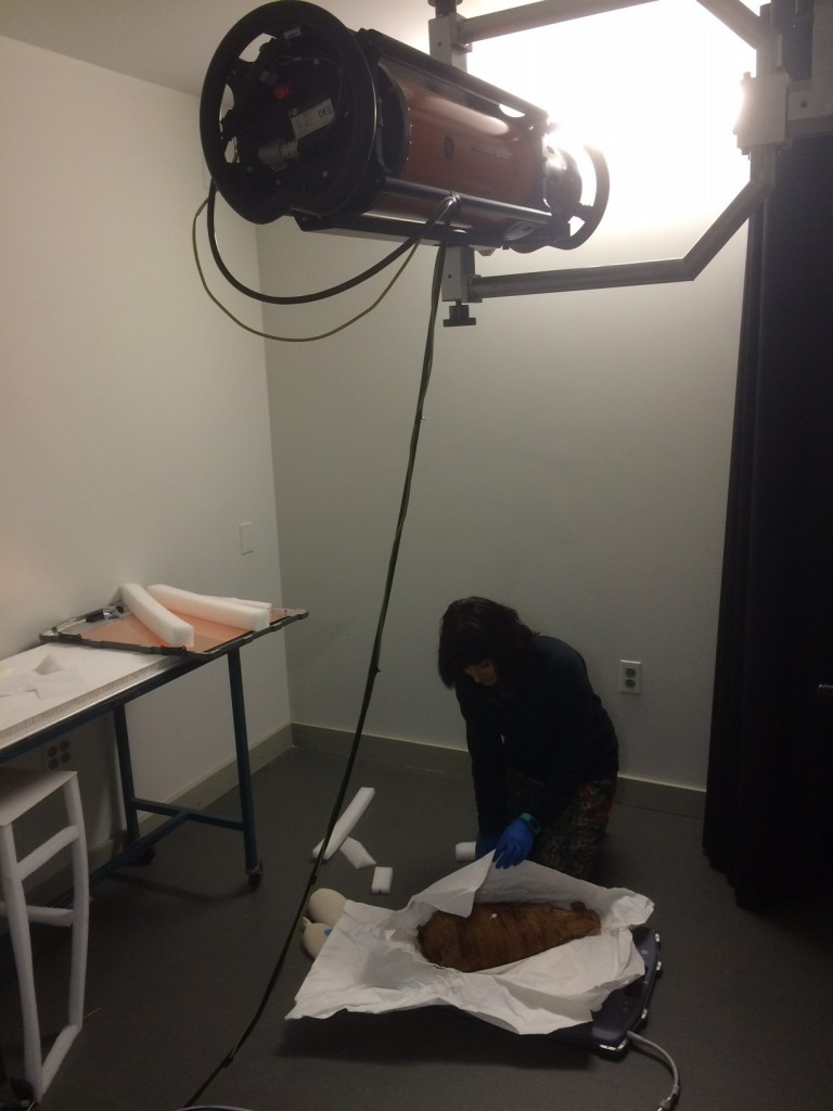 Alexis arranges an animal mummy on the x-ray digital capture plate below the x-ray tube.