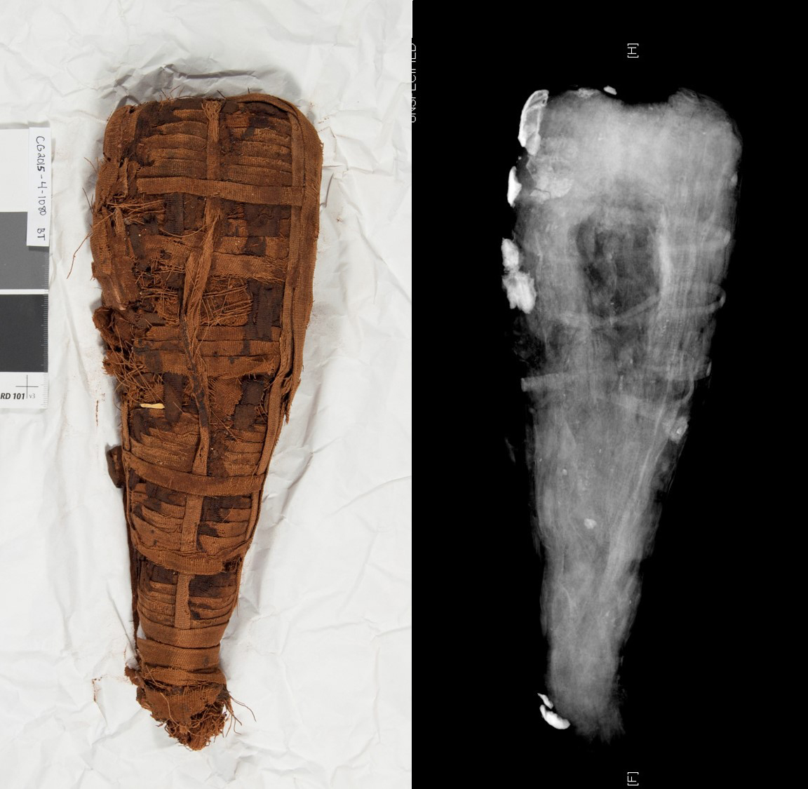 Mummy (left) and radiograph (right) showing nothing inside the wrappings.