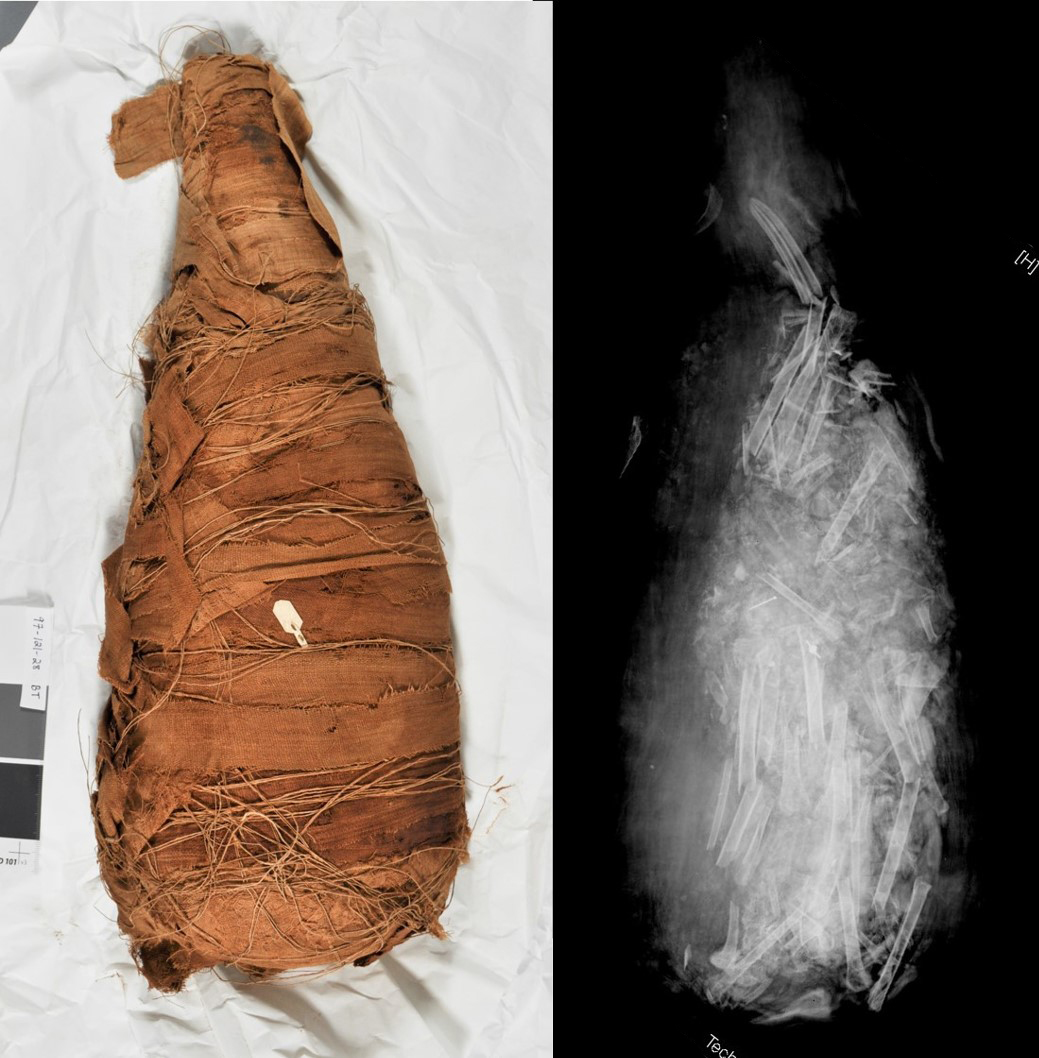 Mummy (left) and radiograph (right) showing a fragmented ibis body inside.