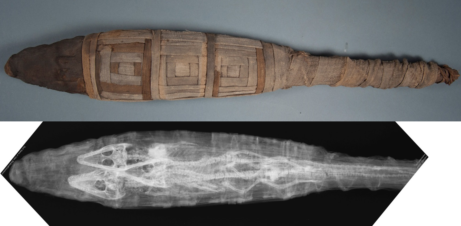 E17631: mummy from above, paired with radiograph