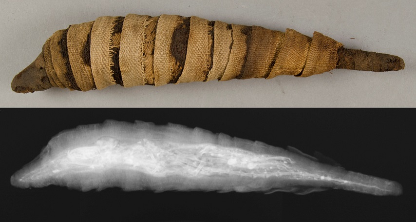 E12435: mummy from the side, paired with radiograph