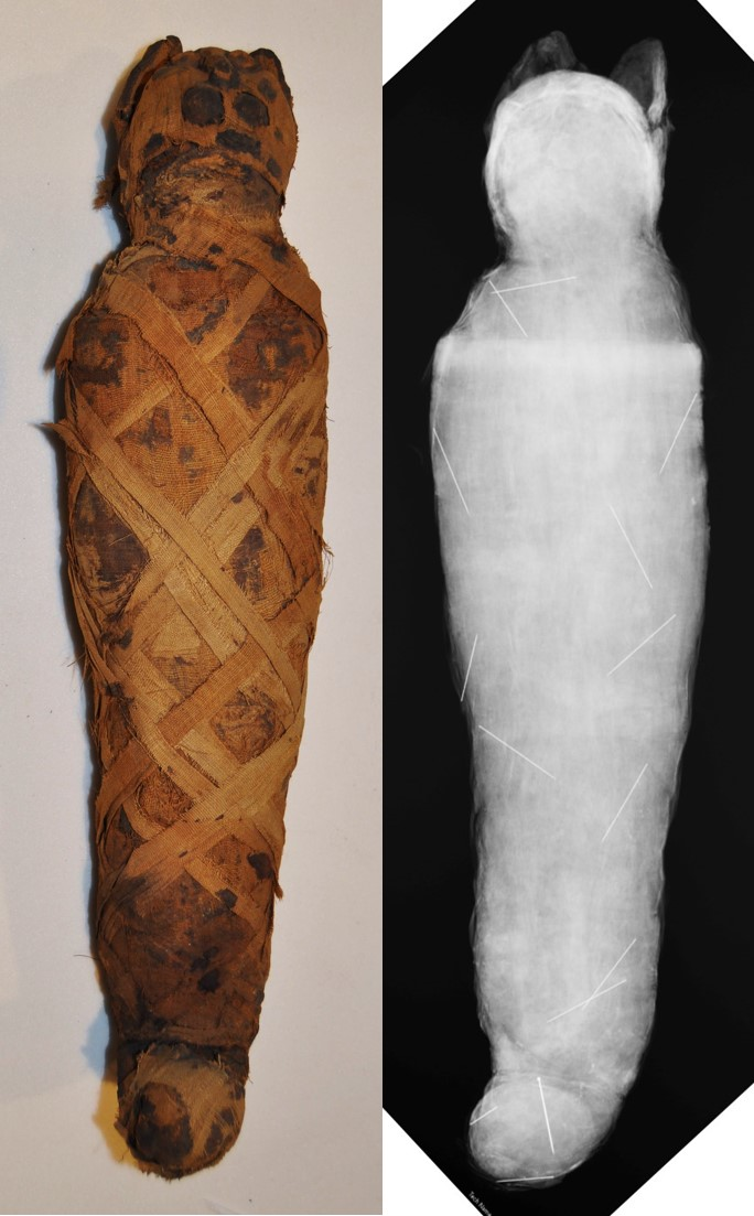 50-17-1: mummy paired with radiograph