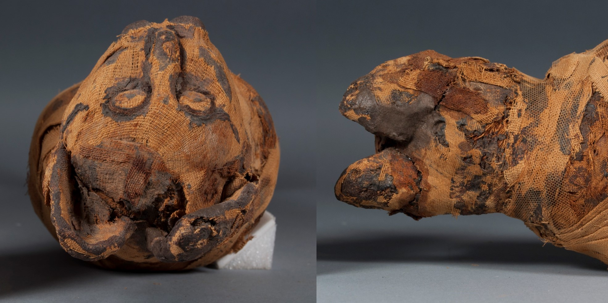 Two views of the cat mummy's head after treatment