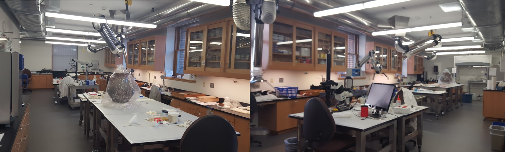 Views of the Conservation Lab ca. 2016