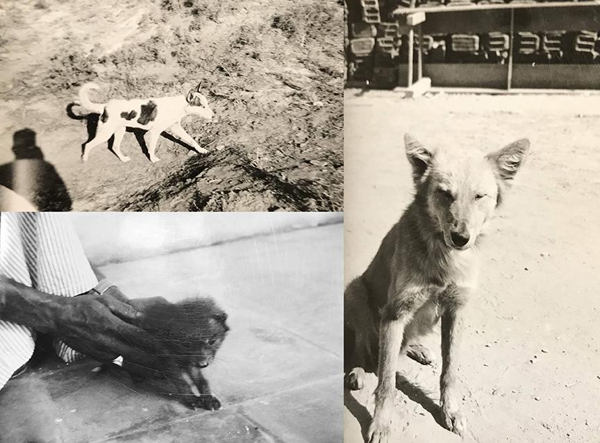 Site animals