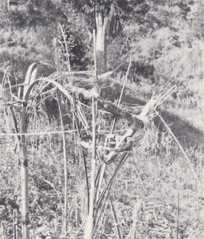 photo of grain