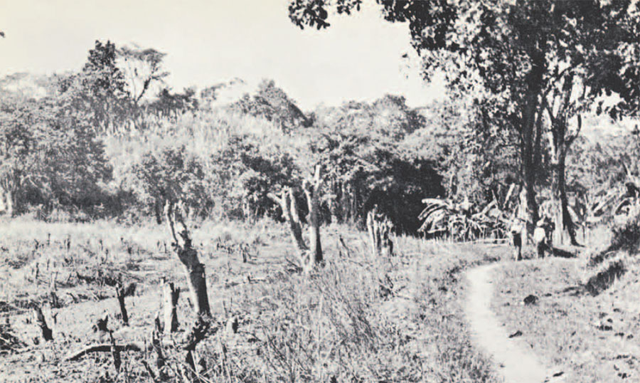 Photo of road with plants that have been burned