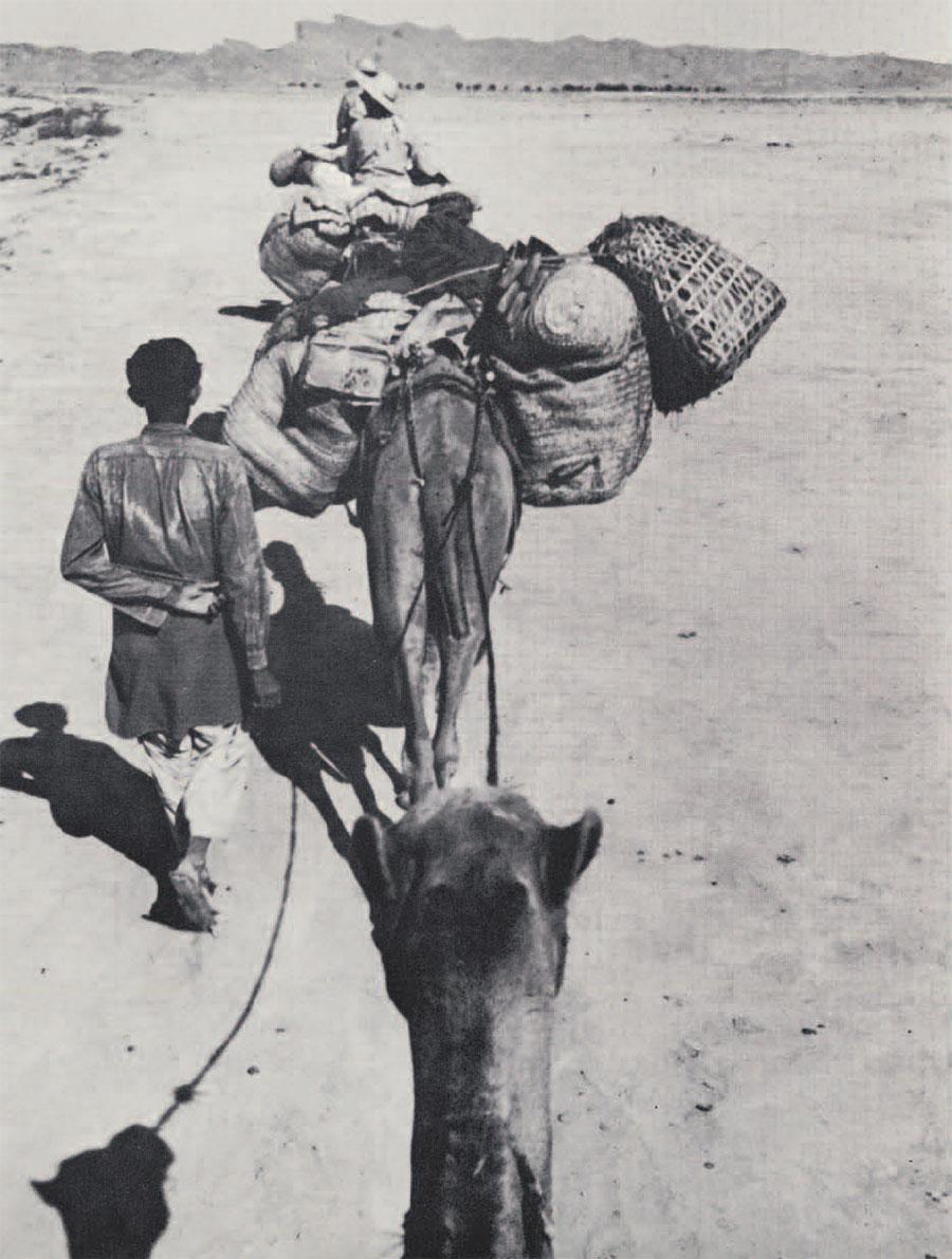 photo of camel train