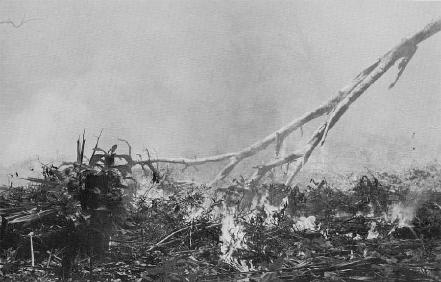 Photo of slashed and burned plants.