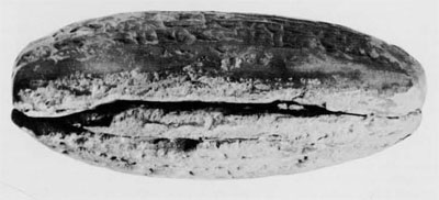 The long edge of the same tablet showing the seam.  Courtesy of the Oriental Institute of Chicago