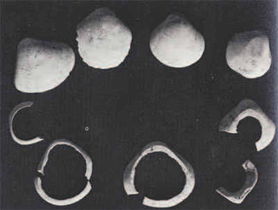 Series of excavated Meretrix shells showing successive stages of bangle manufacture (clockwise from upper left hand corner).