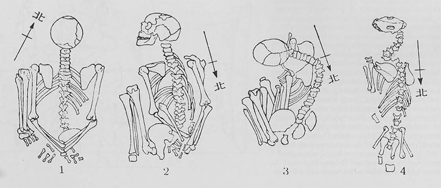 Skeletons of three human victims and one dog. Some stones were found next to No. 1, No. 3 is a woman, the curvature of her spine showing that she had been a cripple suffering from spinal deformation. All three had their hands tied together. No. 4 is the skeleton of a dog.