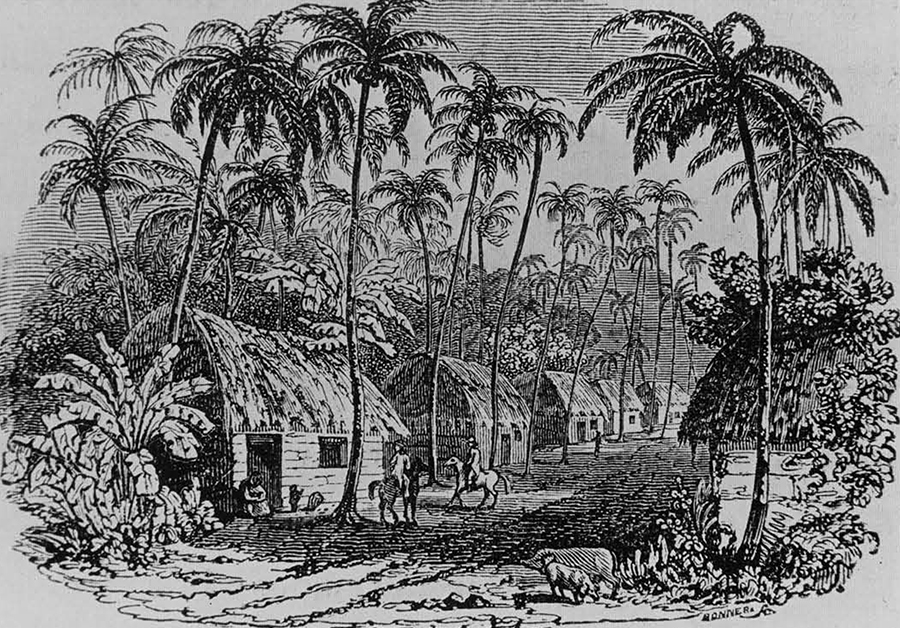 essay on slavery in the caribbean Enslaved women and slavery before and after 1807 this essay focuses on the everyday lives of enslaved caribbean slavery had always been a deadly system.