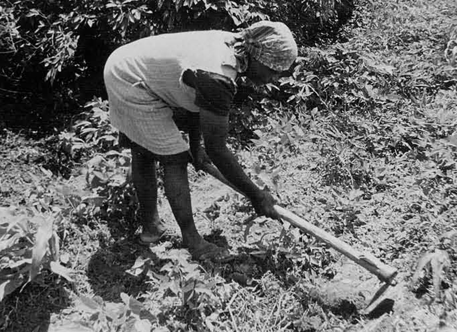 Like her enslaved forebearers, this cultivator is really a horticulturalist who tends carefully to the needs of each of her plants.