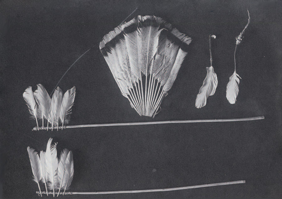 Feathers in Southeast American Indian Ceremonialism | Expedition