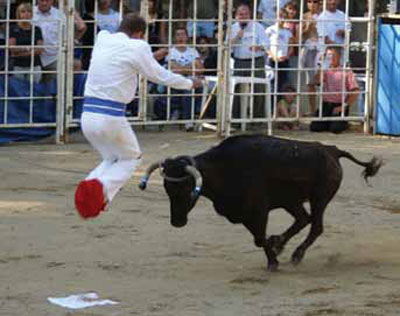 Above, a modern French sauteur or jumper leaps in the air as a vache landaise or cow rushes toward him.
