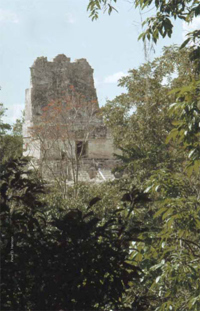 Temple III at Tikal rises out of the jungle, west of the Central Acropolis, in this early photograph from the site.