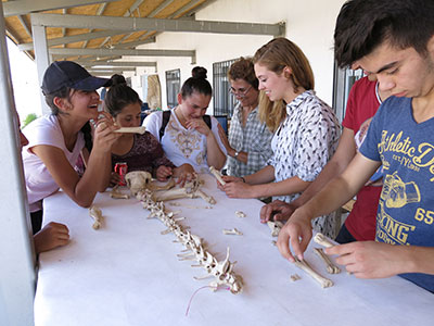 Students in the CHEP program are taught to identify Phyrgian sheep bones.