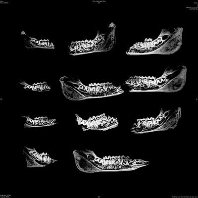 Photo of xrays