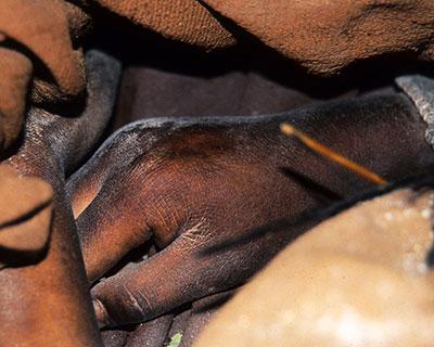 photo of mummy hand