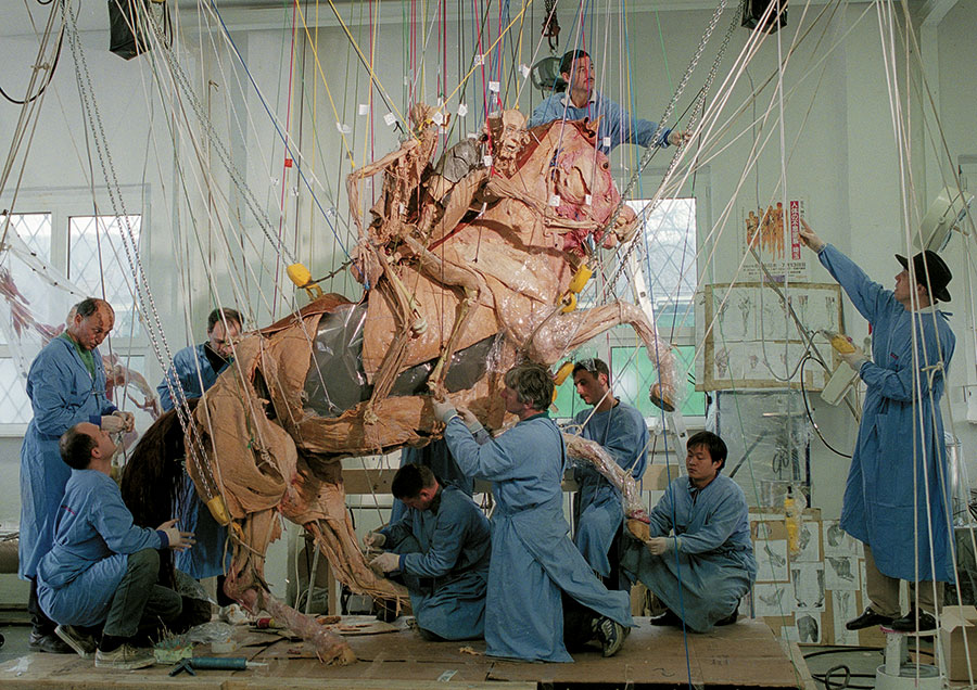 Photo of people working on the horse