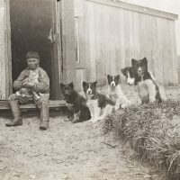 photo of child with dogs